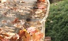 Exterior Solutions - Chattanooga: $70 for $140 Worth of Gutter Cleaning  at Exterior Solutions