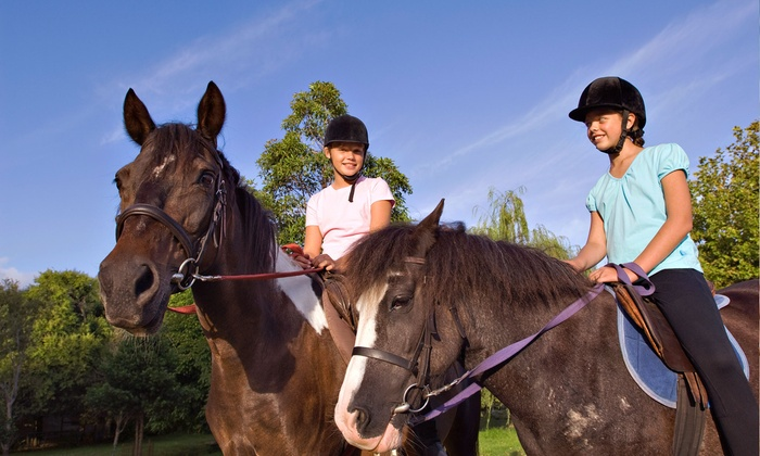 Suncoast Stables - Keystone Park Colony: One or Four 30-Minute Private Horseback-Riding Lessons at Suncoast Stables (Half Off)
