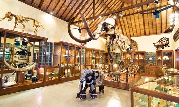 Bali: Elephant Ride & Show 5