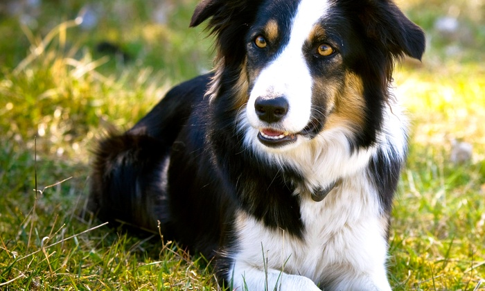 Pooch Care - Friendswood: $10 for $20 Worth of Services at Pooch Care