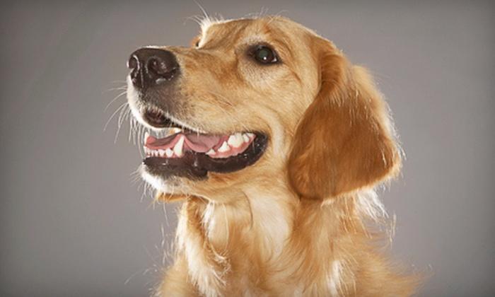 Loose Pooch Dog Club - Oak Park: One or Three Days of Dog Daycare at Loose Pooch Dog Club (Up to 58% Off)