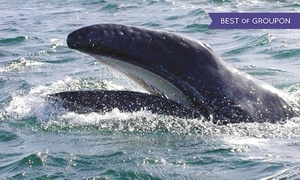 Mystic Sea Charters: Gray-Whale-Watching Tour for One, Two, or Four from Mystic Sea Charters (Up to 40% Off)