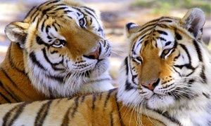 Wildlife Survival Sanctuary: Exotic Animals Walking Tour for Two or Up to Six at Wildlife Survival Sanctuary (Up to 55% Off)