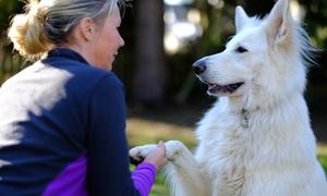 Hundeschule Stadtwolf.com: 1x, 2x oder 3x Einzeltraining für Hunde sowie Beratung in der Hundeschule Stadtwolf.com (bis zu 56% sparen*)
