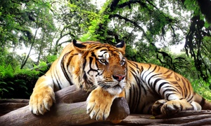 National Zoological Gardens: Pretoria Zoo Entrance from R99 for Two at the National Zoological Gardens (Up to 51% Off)