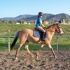 Up to 56%Off Horseback-Riding Lessons