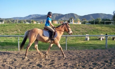 One, Two, orThree60-Minute Horseback-Riding Lessons at Breezeway Farms (Up to 56%Off)