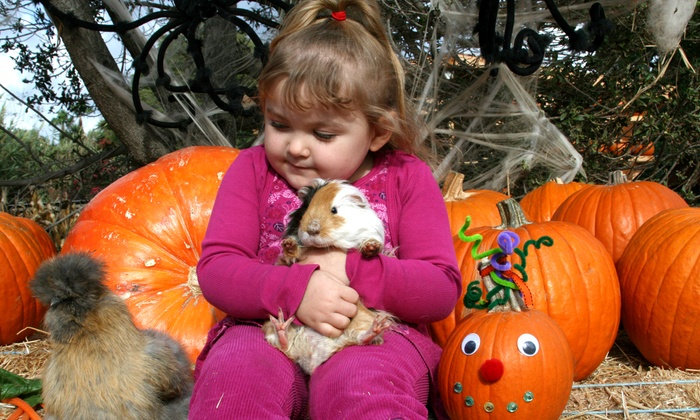 Zoomars - San Juan Capistrano: $25 for a Petting Zoo Admission for Four with Train Rides and Pumpkins for Two at Zoomars ($58 Value)