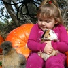 57% Off Petting Zoo and Pumpkin Patch Package