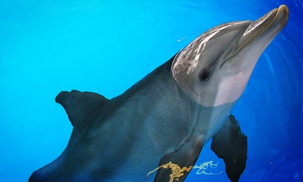 Clearwater Marine Aquarium Visit, Membership, Animal Adoption, Camp, Party, or Boat Tour (Up to 43% Off)