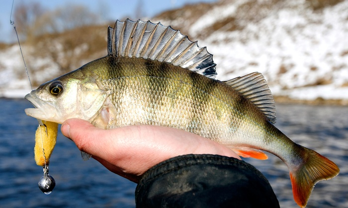 Bob Rees Fishing Guide, LLC - Hammond: $89 for Full-Day Crabbing Trip from Bob Rees Fishing Guide, LLC ($200 Value)