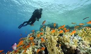 Oceani (Santa Venerina): Immersioni subacquee per una o 2 persone sul litorale catanese e siracusano da Oceani (sconto fino a 83%)