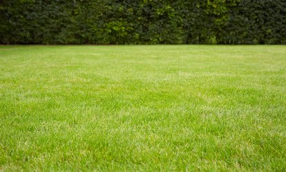 50% Off Lawn Fertilization and Weed Control