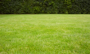 A+ Quality Lawn Care: Pest Control Spray, Aeration and Overseeding, or Fertilizer Program from A+ Quality Lawn Care (Up to 66% Off)