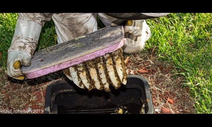 BEE ABOUT IT! HONEYBEE RESCUE AND RELOCATION TEAM OF SOUTH FLORIDA - Fort Lauderdale: $96 for $175 Worth of Water Meter Bee-Removal Services — Bee About It! Honeybee Rescue Team