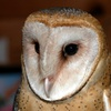 Up to 42% Off Admission to Cochran Mill Nature Center
