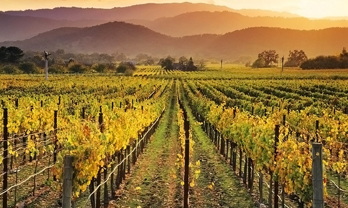 Napa Valley Wine Country Tours Multiple Locations 89 For A Tour Of Muir Woods