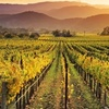 Muir Woods or Wine Country Tour ($135 Value)