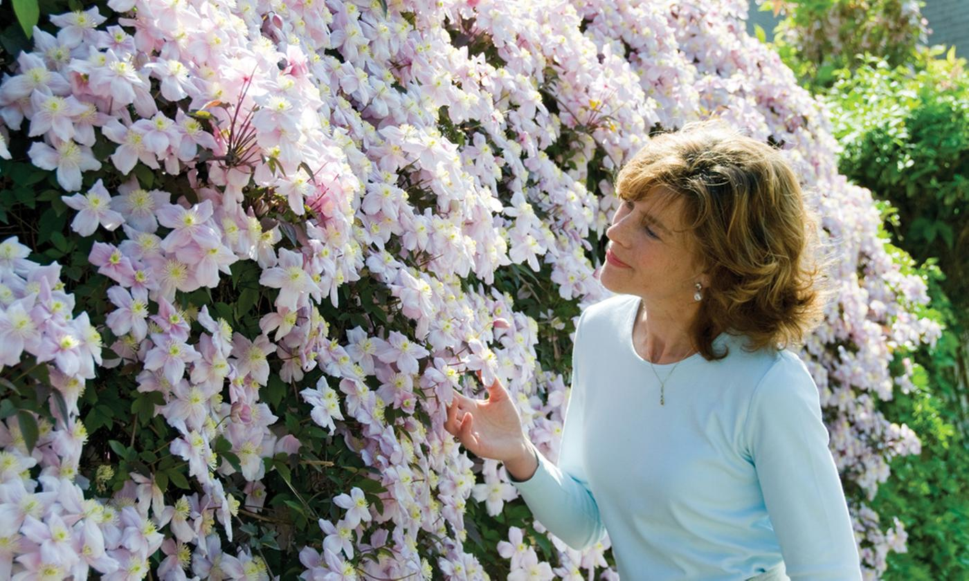 One, Two or Three Plants Clematis Montana 'Mayleen'