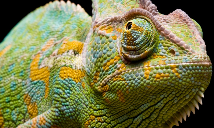 Lone Star Reptile Expos - Arlington: Admission for Two or Four to Lone Star Reptile Expos (Up to 58% Off)