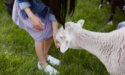 image for One-Day Family Pass for Two Adults and Two Children at Clonfert Pet Farm (Up to 33% Off)