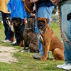 50% Off Private Obedience-Training Session