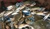 15% Cash Back at Key West Shrimp Company