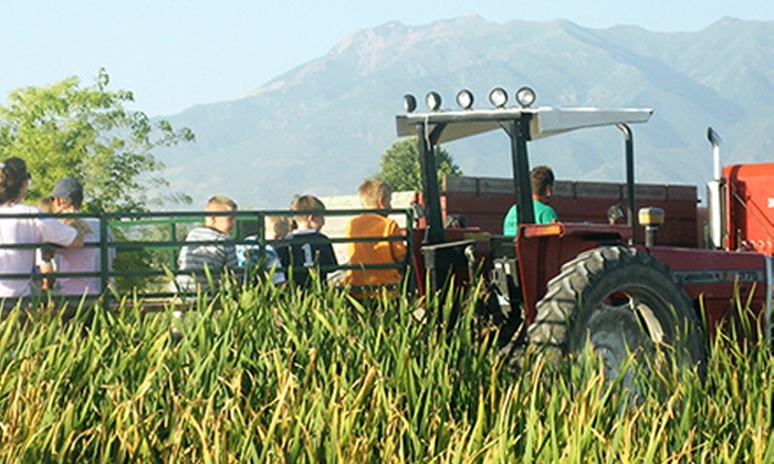 Black Island Farms - North Davis: Corn Maze Admission, Pumpkin Hayride, and Farm Activities for Two or Four at Black Island Farms (Up to 34% Off)