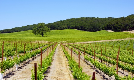 2-Night Stay for Four in a Deluxe RV Rental Site or Vacation Rental at Vines RV Resort in Paso Robles, CA