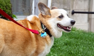 Animal Medical Center: $47 for a Annual Veterinary Examination for a Dog or Cat at Animal Medical Center ($200 Value)