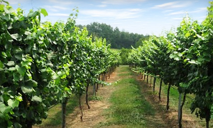 Travels In Wine Tours - Hendersonville: Fall Wine Tour for One or Two from Travels in Wine Tours
