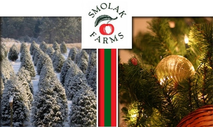 Smolak Farms - North Andover: $38 for a Christmas Tree at Smolak Farms (Up to $75 Value)
