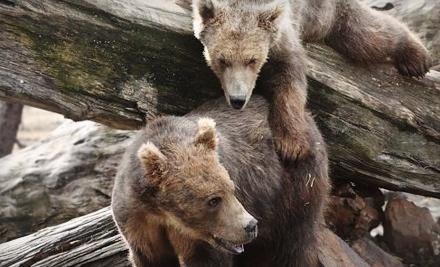 Alaska Wildlife Conservation Center - Alaska Wildlife Conservation Center in Girdwood