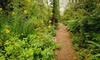 Wing Haven Garden and Bird Sanctuary - Myers Park: $13 for One Ticket to Gardener's Garden Tour on Mother's Day Weekend at Wing Haven Gardens & Bird Sanctuary (Up to $30 Value)