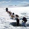 Half Off Helicopter and Dogsled Tour
