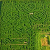 Up to 59% Off Fall Corn-Maze Outings in Fontanelle