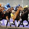 Up to 53% Off a Breeders' Cup Ticket in Louisville