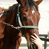 Up to 54% Off Horseback-Riding Lessons in Chino
