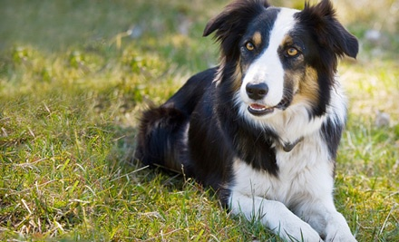 2 Days of Dog Daycare (up to a $62 value) - Doggie's Day Out in Murfreesboro