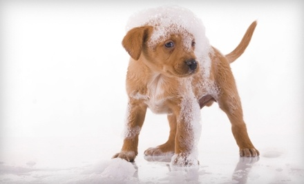 Four Paws Only: 1 Small-Dog Grooming (Less than 17lbs) - Four Paws Only in Lakeland