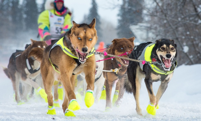 Team Zappa - Team Zappa: One-Hour or Half-Day Dogsledding Trips from Team Zappa (Up to 50% Off). Six Options Available