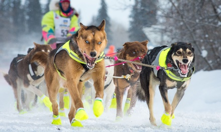 One-Hour or Half-Day Dogsledding Trips from Team Zappa (Up to 50% Off). Six Options Available
