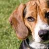 Up to 53% Off Self-Serve Dog Washes at Diva Dog 2