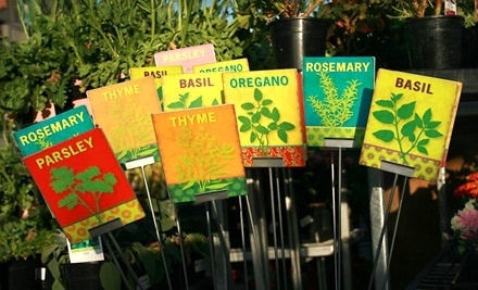 $70 Groupon to The Plant Stand - The Plant Stand in Costa Mesa