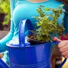 Up to 67% Off Plants or Upscale Event