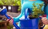 150 Sunset (formerly Nash Gardens) - El Paso: Plants and Shrubs or an Upscale Event at 150 Sunset (formerly Nash Gardens) (Up to 67% Off)