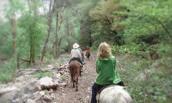 Cherry Creek Lodge - Young: Half-Day or Full-Day Horseback Trail Ride at Cherry Creek Lodge in Young