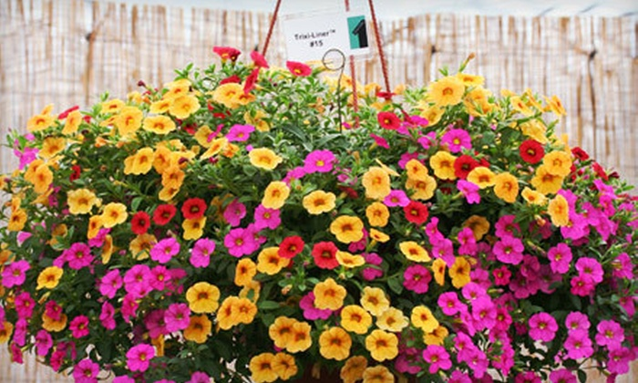 Foertmeyer & Sons Greenhouse Co. - Concord: $15 for $30 Worth of Plants and Flowers at Foertmeyer & Sons Greenhouse Co. in Delaware