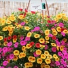 Half Off Plants and Flowers in Delaware