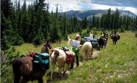 Adult Admission to Llama Trekking and Lunch (a $99 value) - Wild Earth Llama Adventures in